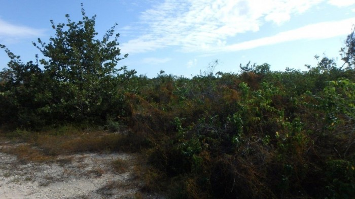 Little Cayman Property For Sale - Image 2